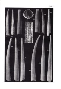 Pavia Plate II
